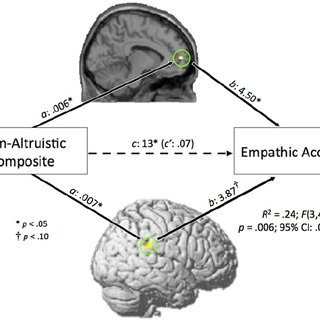 (PDF) I Know How You Feel: The Warm-Altruistic Personality