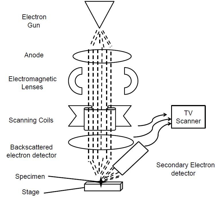 Schematic flow diagram of a Scanning Electron Microscope