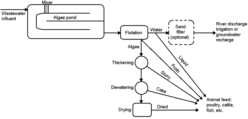Flow Scheme of the Accelerated Photosynthetic Process for