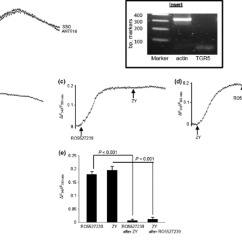 Human Taste Buds Diagram Ford Focus Wiring 2008 Effects Of Zy And Pharmacological Agents On Ca 2 I In Bud Cells Htbc The Changes Are Shown Response To After