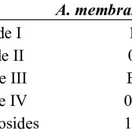 Effect of AM supplementation on morphology of liver (A