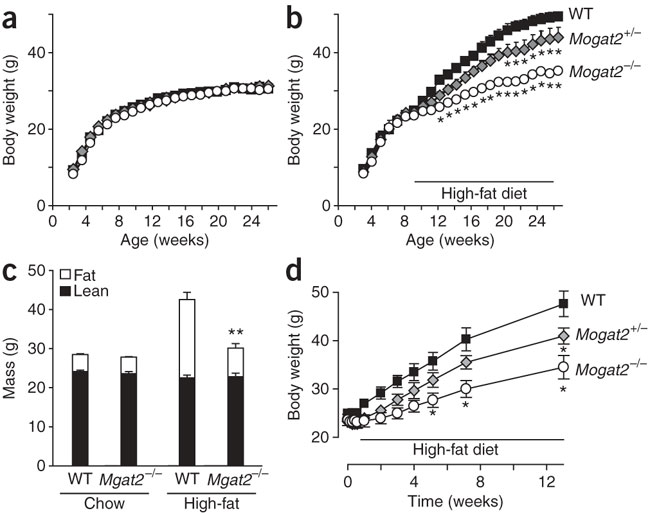 MGAT2-deficient mice are protected from obesity induced by
