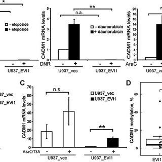 (PDF) Induction of the proapoptotic tumor suppressor gene