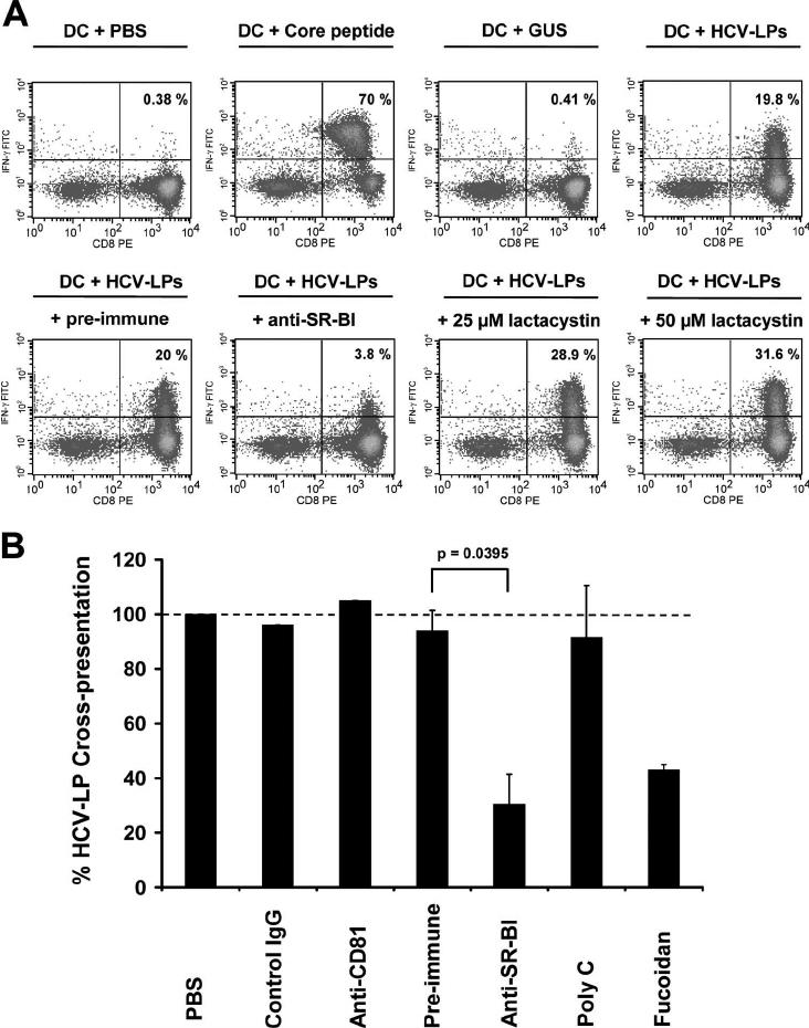 SR-BI is involved in HCV-LP cross-presentation to HCV
