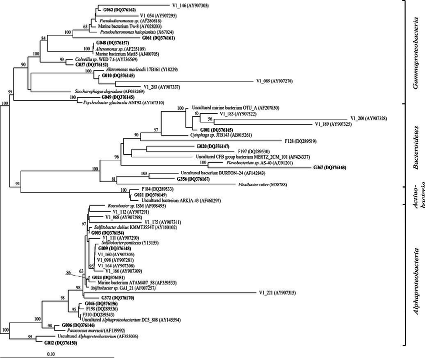 Phylogenetic tree of Alphaproteobacteria