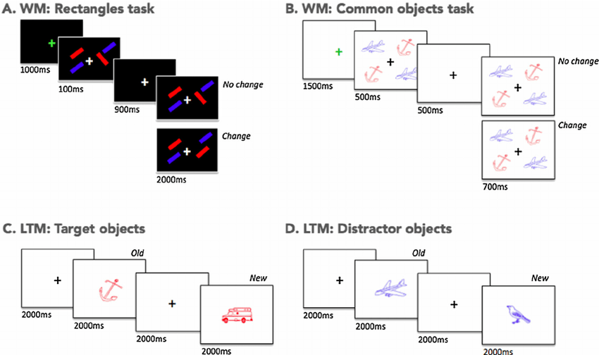 Schematic of the working memory and long-term memory tasks