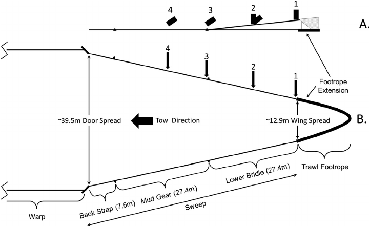 Quasi-scale diagram of the Aberdeen-style trawl's footrope