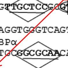 (PDF) Identification of transcription factors involved in