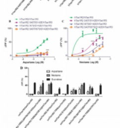 evaluation of single or multiple point mutation affecting the human squirrel monkey sweet taste receptors [ 850 x 1641 Pixel ]