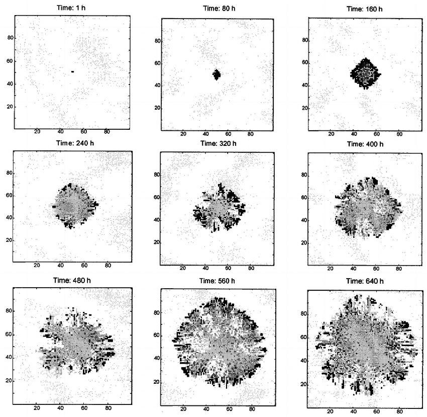 Simulated evolution of an SCLC tumor spheroid in vitro