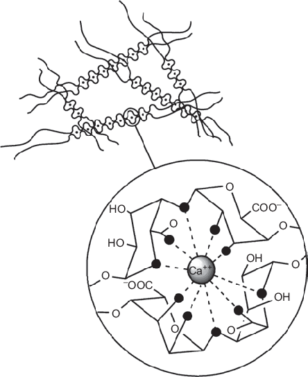 The egg-box structure of alginate after gelation with Ca 2