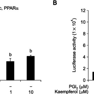 Effects of kaempferol on NF-κB activity in HaCaT cells and