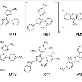 Schematic representation of the proposed mechanisms of