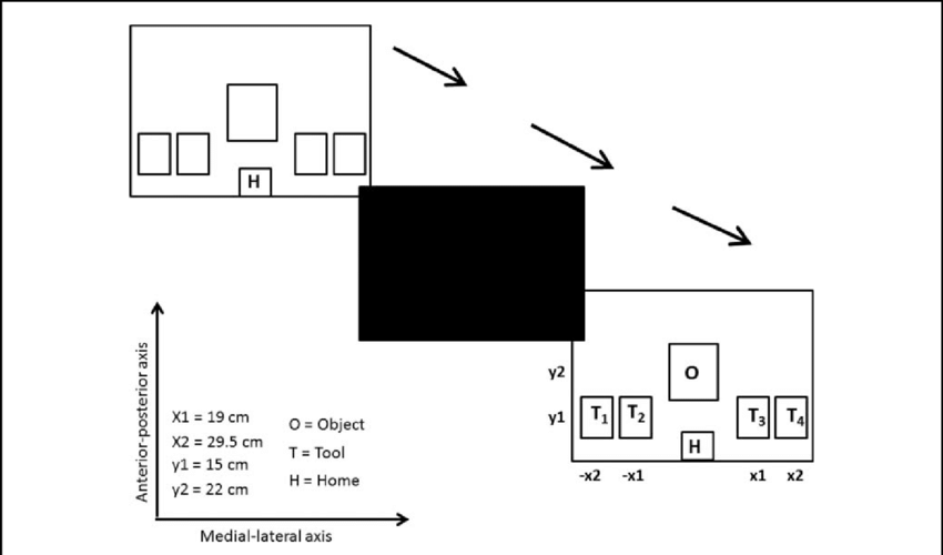 Schematic of a trial progression. The first square