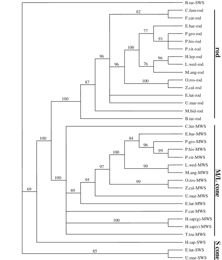 hight resolution of parsimonious phylogenetic tree of rod m l and s cone opsin sequences created using bootstrapping 1 000 replicates species are listed by the abbreviated