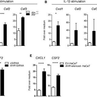 Exacerbated Skin Inflammation in Ahr-Deficient Mice