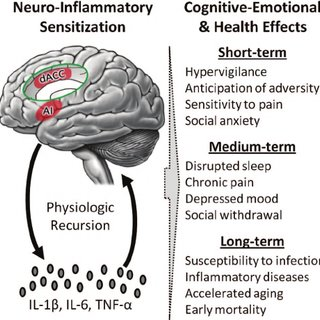 (PDF) From Stress to Inflammation and Major Depressive