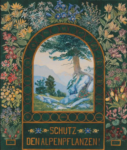 small resolution of protect alpine flora poster by gustav jahn 1910 alpenvereinsmuseum innsbruck