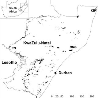 (PDF) Podocarps in Africa: Temperate Zone Relicts or