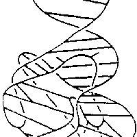 (Levitt). Proposed folding of tyrosine suppressor tRNA. (a