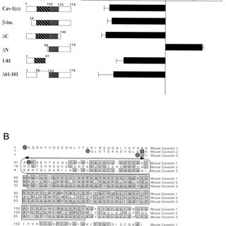 Cyclin D1 protein levels are down-regulated by caveolin-1
