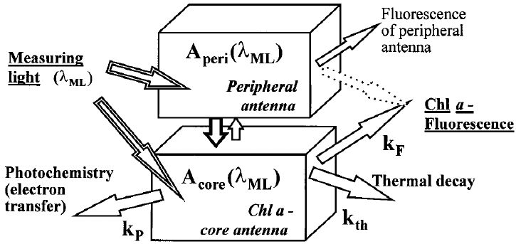 General model for PS II antenna systems. A peri ( λ ML