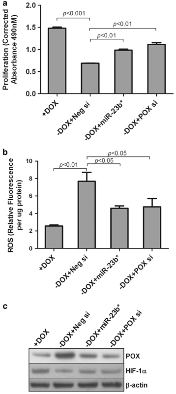 R-23b* inhibits ROS production and promotes the