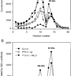 ammonium chloride attenuates the reduction of y2 receptor dimers by pertussis toxin the cells were treated with 0 1 or 1 ng ptx ml growth medium for 24 h  [ 633 x 1259 Pixel ]
