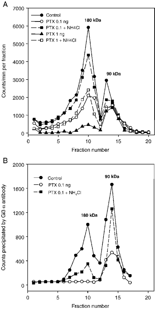 small resolution of ammonium chloride attenuates the reduction of y2 receptor dimers by pertussis toxin the cells were treated with 0 1 or 1 ng ptx ml growth medium for 24 h