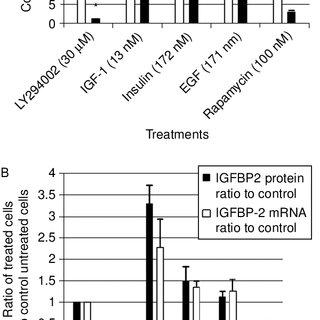 Rapamycin inhibits tumor bladder tumor progression