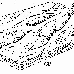 -Facies model of a gravel-bed braided river with sediment