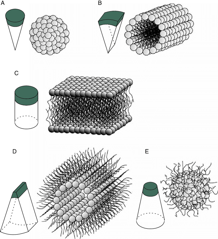 Schematically depicted polymorphism of phospholipid