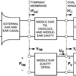 (PDF) Middle-ear velocity transfer function, cochlear