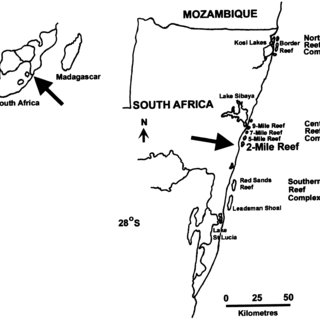 (PDF) Sustainable dive ecotourism on a South African coral