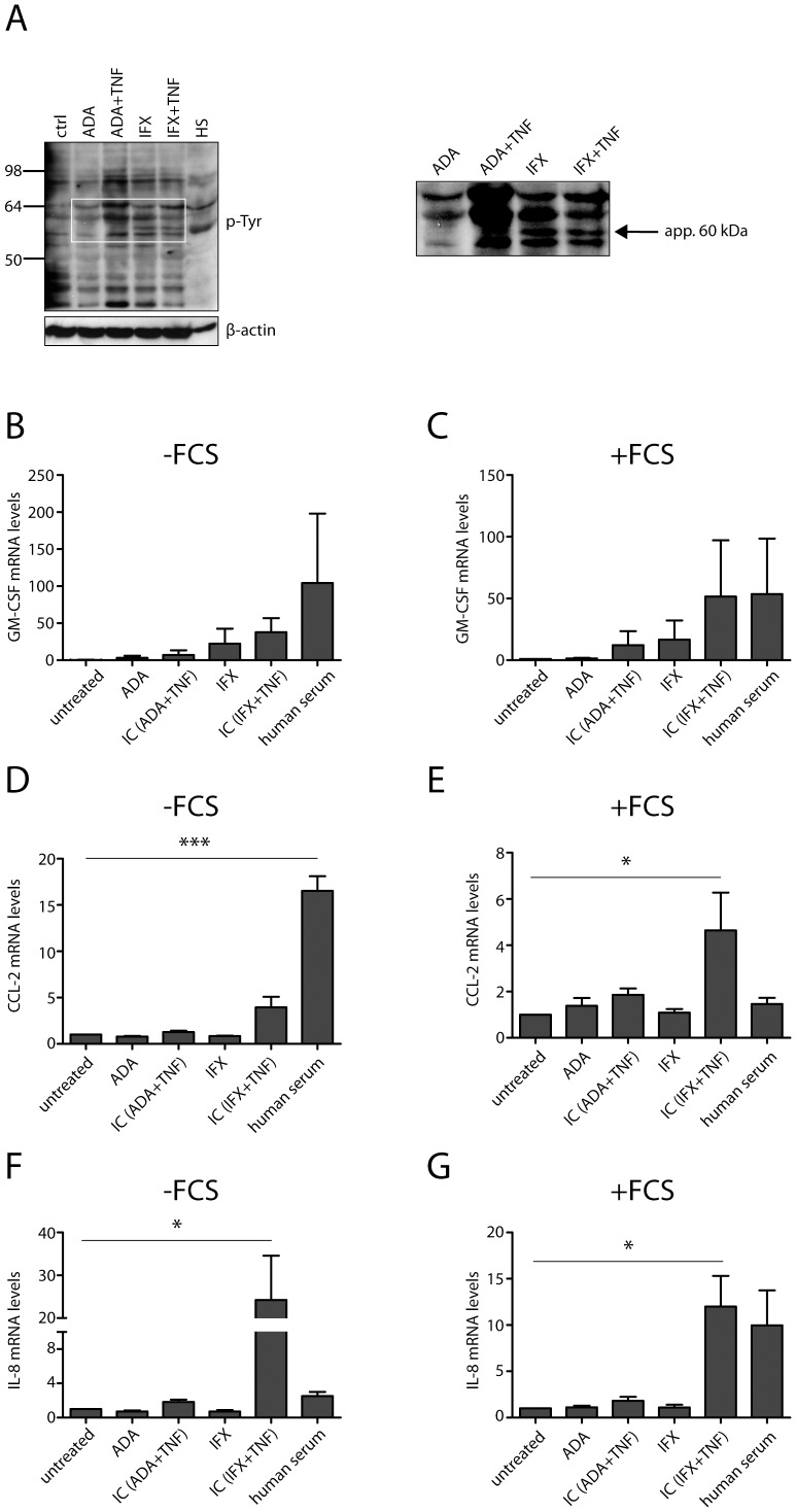 Both ADA and IFX immune complexes were added to THP-1