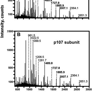 Coelution of PEPC activity with p110 and p107 during