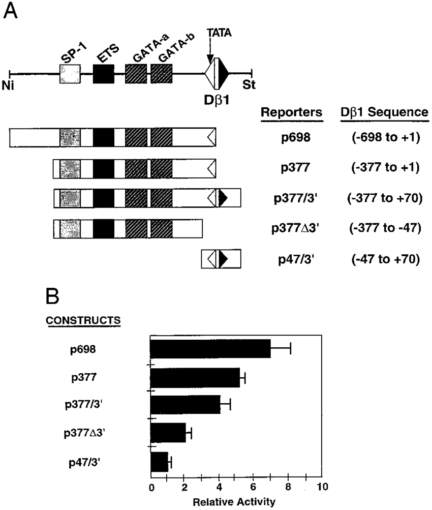 Functional definition of PD. A, Diagram of D1 sequences