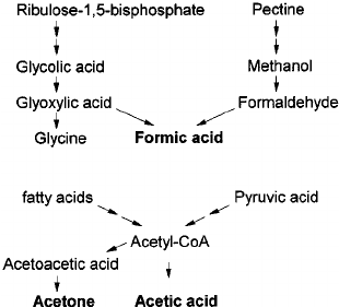 Simplified scheme of pathways for formic acid and acetic