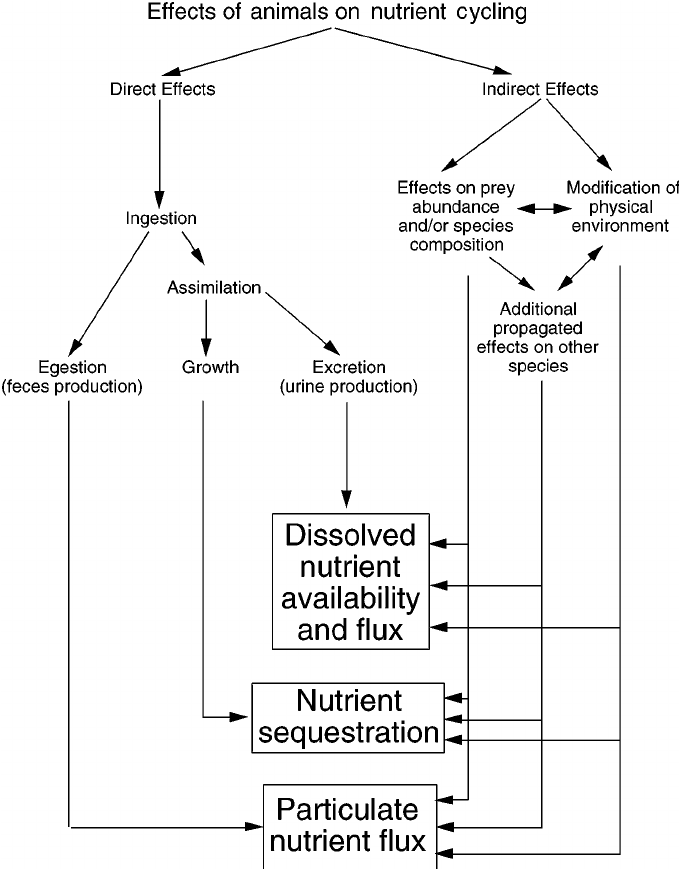 Detailed Scientific Nitrogen Cycle Diagram Schematic Diagram Of Animal Mediated Nutrient Cycling Via