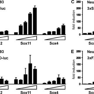 Genotype distribution and growth parameters of Sox12