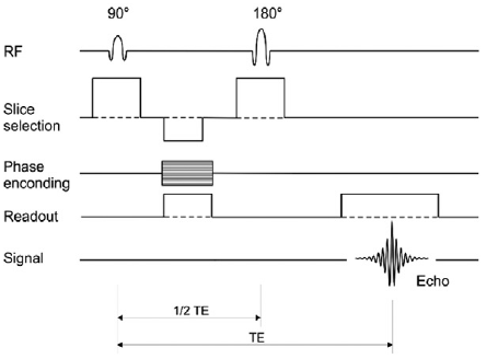foot pulses diagram structure of hydra pulse schematic a spin echo sequence rf u003d radio frequency names