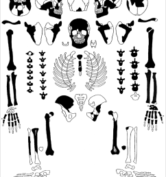 state of skeleton preservation and integrity drawing by m ivn used diagram  [ 850 x 1043 Pixel ]