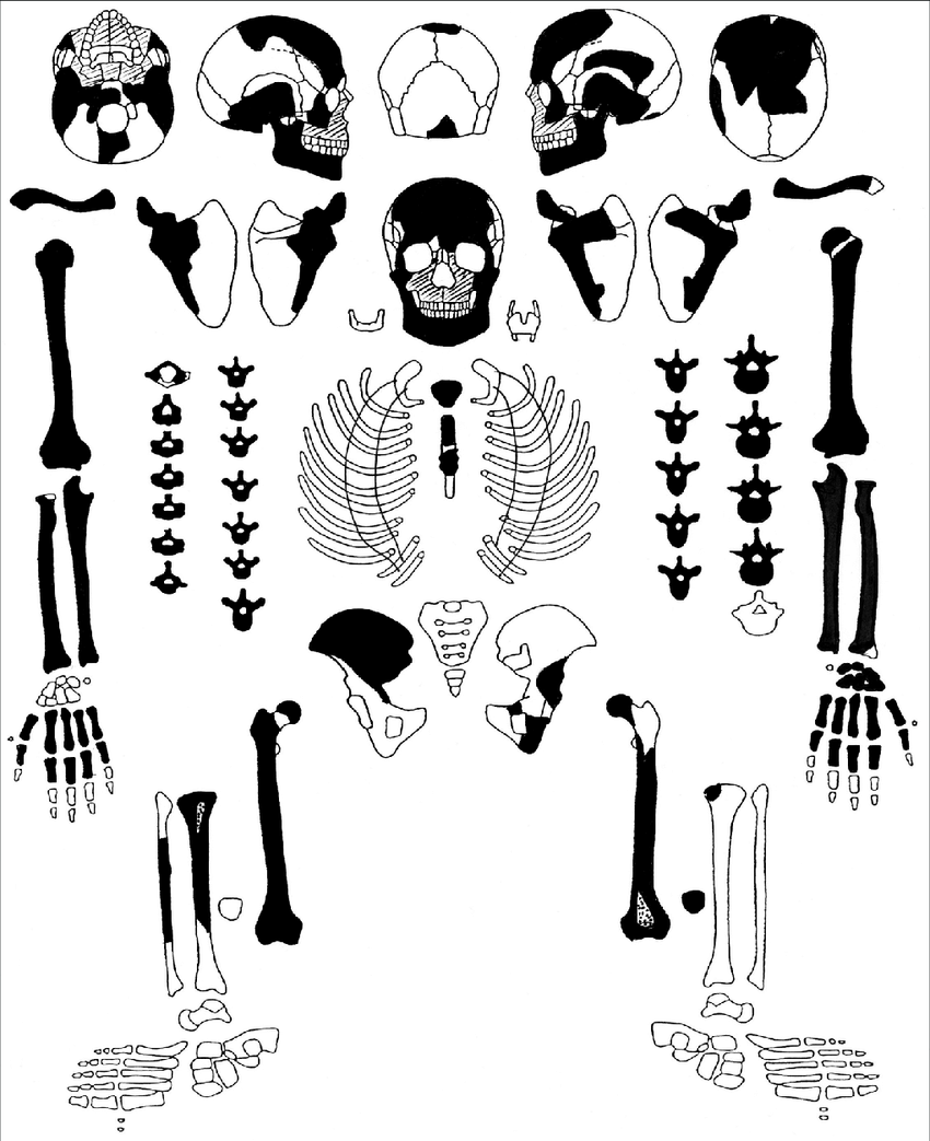 hight resolution of state of skeleton preservation and integrity drawing by m ivn used diagram