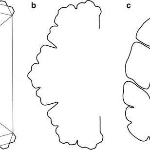 (PDF) The Fractal Geometry of the Brain