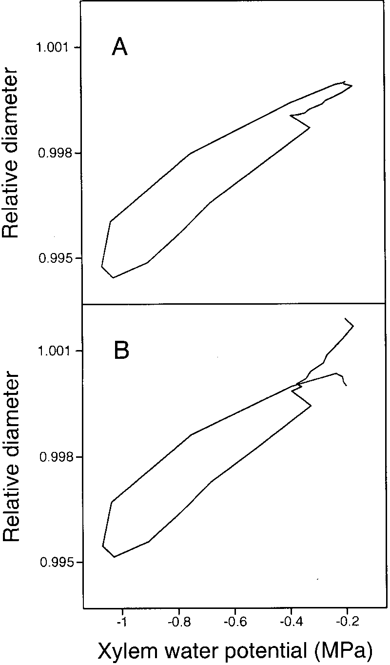 hight resolution of simulated relationship between root diameter and xylem water potential for plum root on september 3
