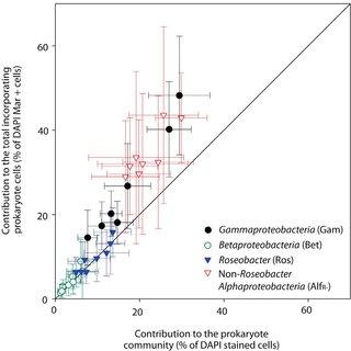 (PDF) Distribution and metabolism of