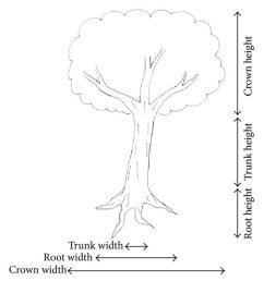 the tree drawing test measurement of the height and width of crown roots [ 850 x 936 Pixel ]