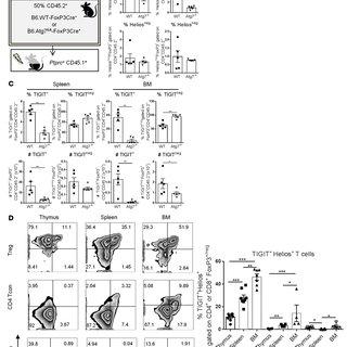 (PDF) Autophagy-dependent regulatory T cells are critical