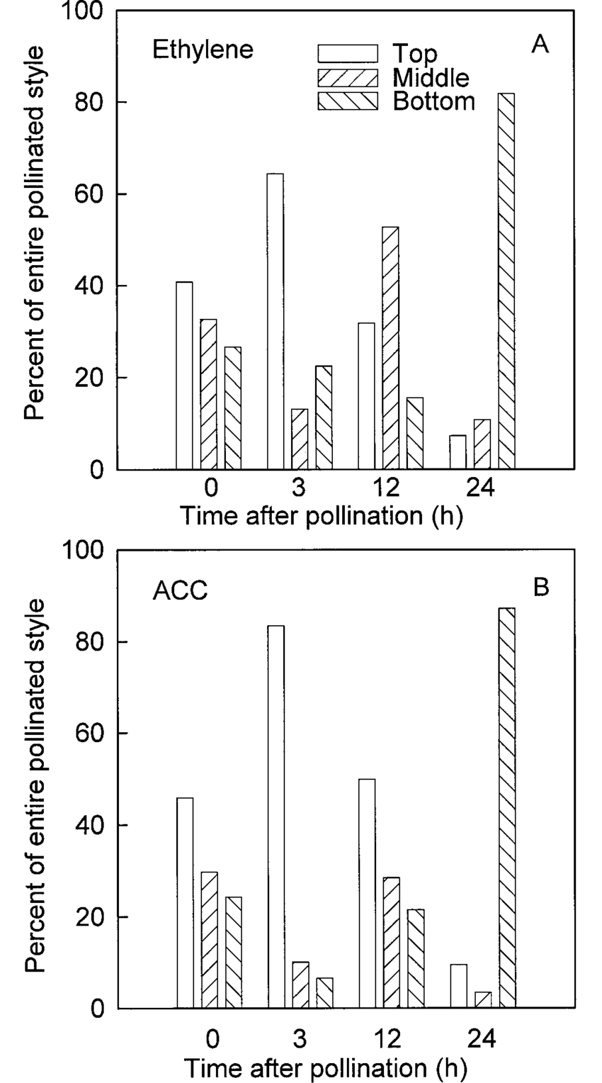 hight resolution of spatial production of a ethylene and b acc within pollinated styles styles were removed from the flower at 0 3 12 and 24 h after pollination