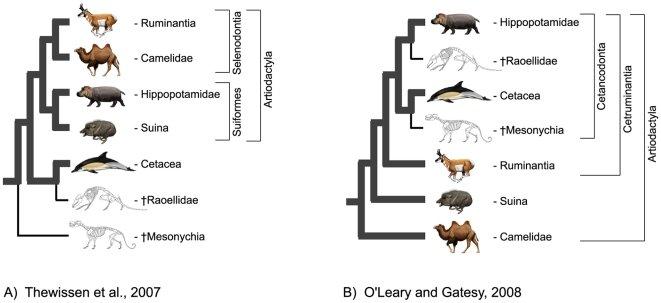 Relationships of Cetacea (Artiodactyla) Among Mammals
